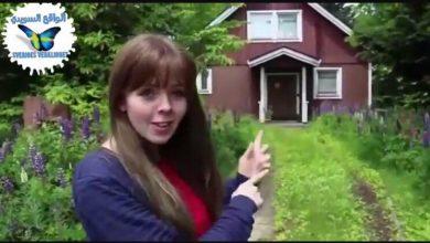 Photo of في الفديو قرية سويدية موجودة في اليابان لأول مرة, النظام السويدي هو الدارج في القرية