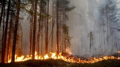 Photo of تعرف على تكاليف الحرائق الحالية التي تعتبر الأسوء عبر تاريخ السويد