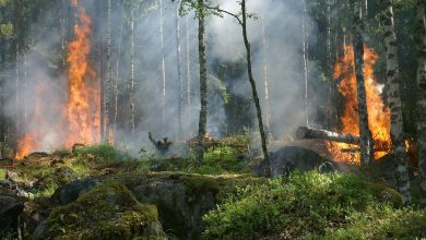 Photo of الدفاع المدني يتوقع توقعات بإستمرار الحرائق الى فصل الشتاء,مع وجود احتمالية لأنفجار أعتدة عسكرية