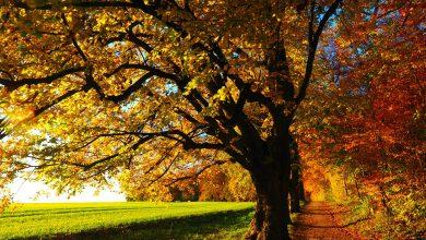 Photo of بلدية ستوكهولم تلغي خطة ترميم مشروع متنزه بسبب وجود ثلاث أشجار عائقة