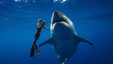 Photo of فتاة تسبح مع قرش عملاق بطول 6 متر في هاواي