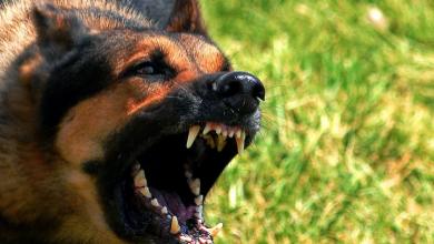 Photo of الحكم على أمراة سويدية قامت بفك كلابها على أم أجنبية وأولادها