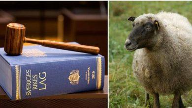 Photo of محاكمة شخص بتهمة ممارسة الجنس مع خروف في الحضيرة