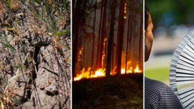 Photo of وفاة ٦٠٠ سويدي السنة الماضية بسبب إرتفاع درجات الحرارة